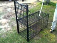 Choosing Good Hog Trap Door Designs