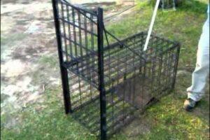 Choosing Good Hog Trap Door Designs